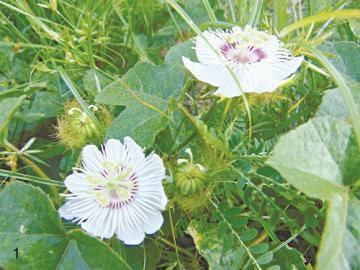 Chữa bệnh bằng hoa